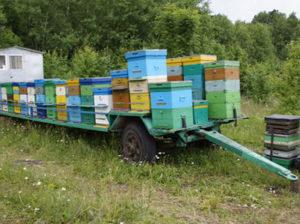 Кочове бджільництво - необхідність