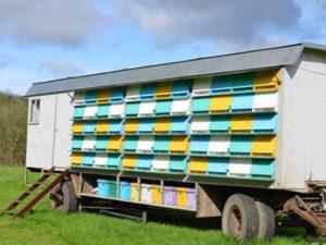Кочове бджільництво - це прибуток