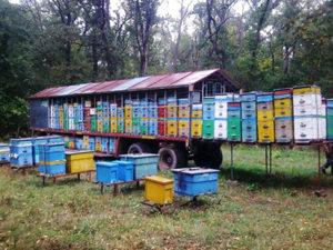 Кочове бджільництво