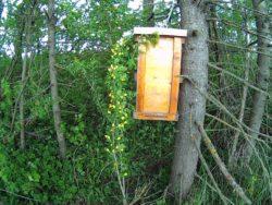 пастка для бджіл на дереві