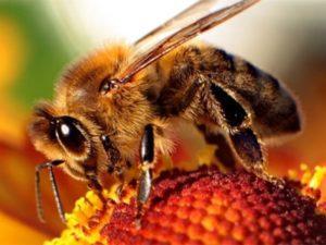 Ліки для бджіл