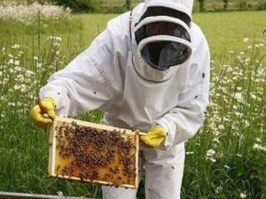 Догляд за бджолами влітку