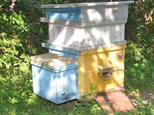 Метод Цебро в бджільництві