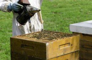 Багатоматочне утримання бджіл