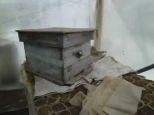 Зимівля бджіл в теплиці
