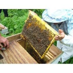 Нарощування бджолосімей восени