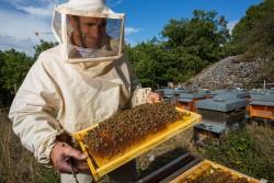 Осіння ревізія бджіл