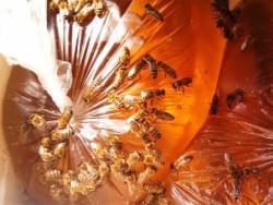 Який мед краще бджолам для зимівлі