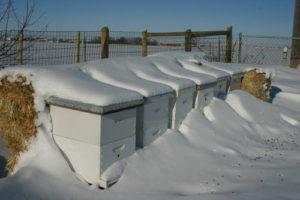 Підготовка бджіл до зимівлі