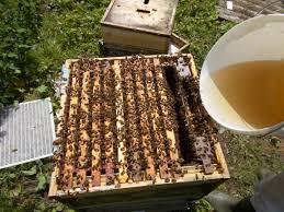 Коли і скільки годовувати бджіл цукровим сиропом