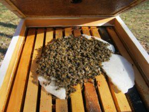 Готуємо цукровий сироп бджолам