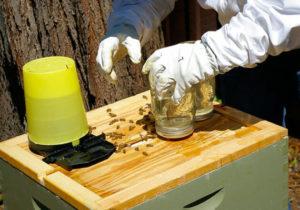 як зробити сироп для бджіл