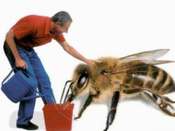 Як годувати бджіл цукром