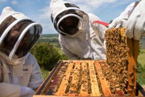 Складання гнізда бджіл на зиму