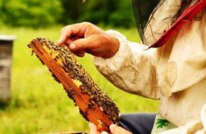 Як збирати бджіл на зиму