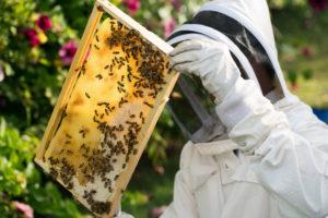 Збірка гнізда бджіл на зиму