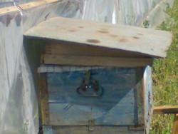 Організація зимівлі бджіл у теплиці