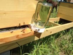 Зовнішня годівниця для бджіл