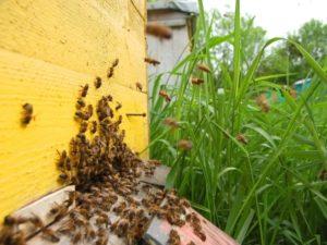 Методи бджільництва