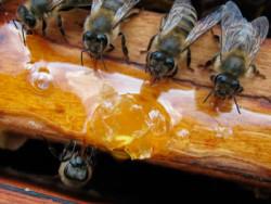 як приготувати сироп для бджіл на зиму