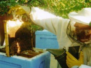 Як розводити бджіл новачку
