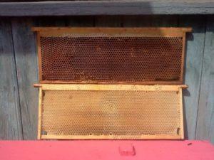 Бджолина суш