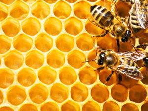 Бджолині стільники