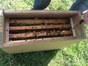 Будова бджолопакета