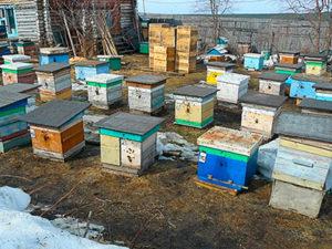 Будівництво бджоляника самостійно