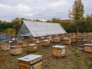 Бджоляник