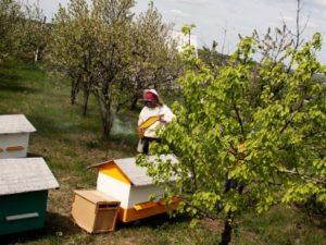 Чистотіл для бджолосімей