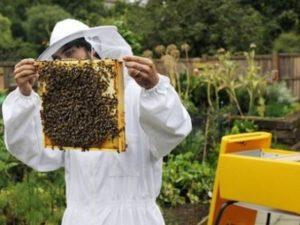 Де взяти бджіл