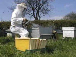 Догляд за бджолами весною