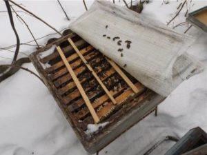 Як доглядати за пасікою взимку?