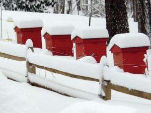 Догляд за бджолиними сім'ями взимку