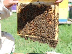 Бджільництво формування відводків