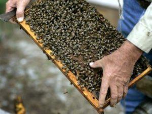 Як зробити відводки бджіл