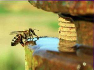 Напування бджіл водою навесні