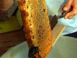 Процес відкачування меду