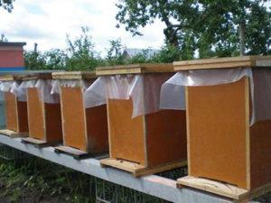 Нуклеуси для бджіл