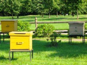 Отвір для бджіл у вулику який повинен бути