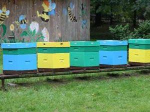 Отвір для бджіл у вулику