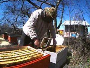 Пересадка бджіл навесні в новий вулик