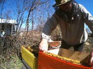 Пересадка бджіл після зимівлі