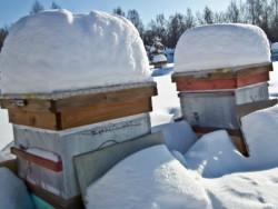 Підготовка бджіл до зимівлі на вулиці