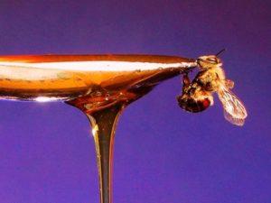 Підкормка бджіл весною