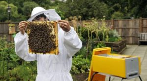 Прискорене розведення бджолосімей
