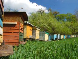 Як швидко розвести бджіл