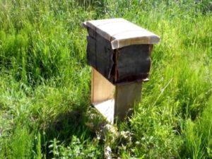 як зробити привой для бджіл самому