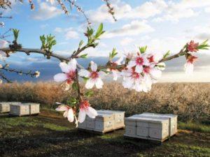 Бджільництво за кордоном